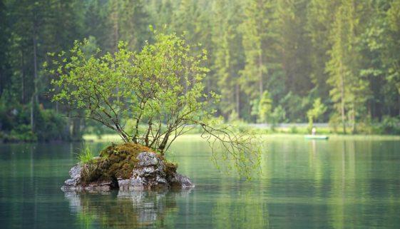 Augalų aromatai gelbėjo žmoniją