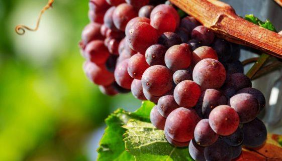 grapes-3665416_1920