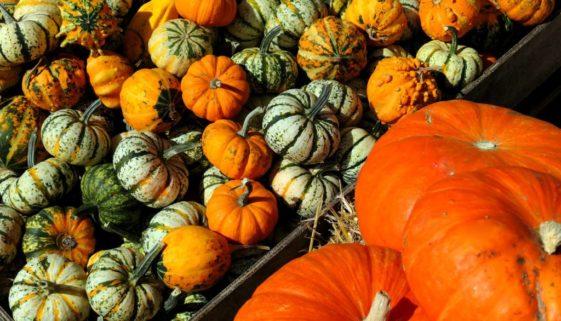 pumpkins-3693492_1920