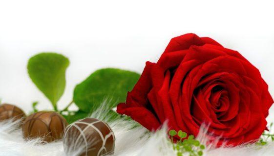 rose-3014267_1920