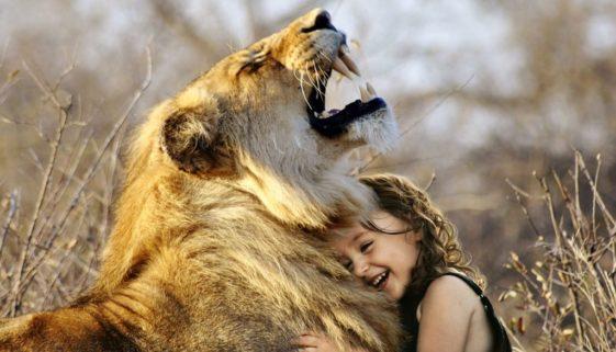 lion-3012515_1920