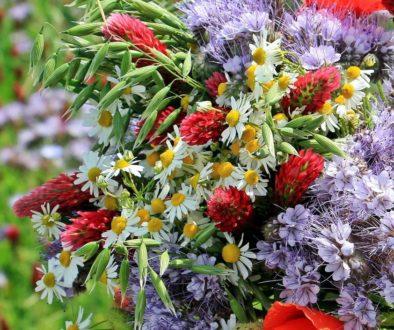 wild-flowers-1423270_1920