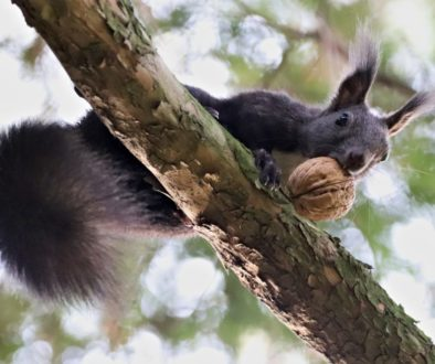 the-squirrel-4659191_1920