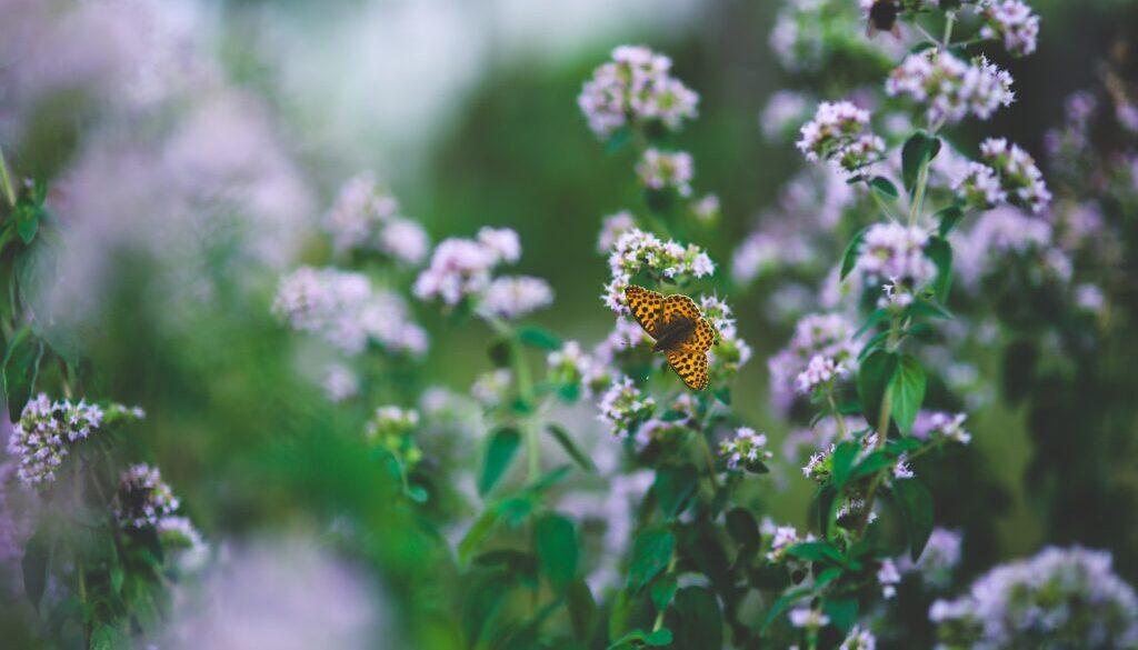 butterfly-791487_1920